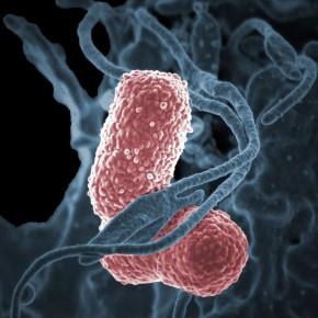 İnsanlığı bekleyen gizli tehlike: Antibiyotiklere Direnç kazanmış Bakteriler